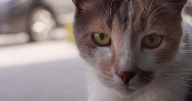İstanbul'un kedilerini konu eden belgeselden yeni bir fragman