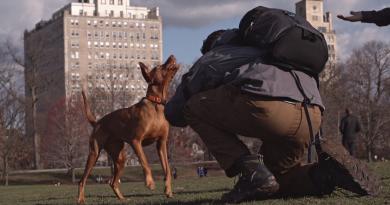 """Günün kısası: """"The Dogist"""""""