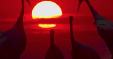 """BBC, """"Earth: One Amazing Day"""" belgeselinden ilk görüntüleri yayınladı"""