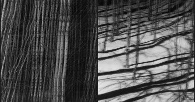 Web Galeri: Patricia Rodas