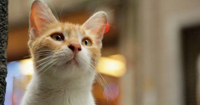 """""""Kedi"""" belgeseli, Critics' Choice Documentary Awards töreninden ödülle ayrıldı"""