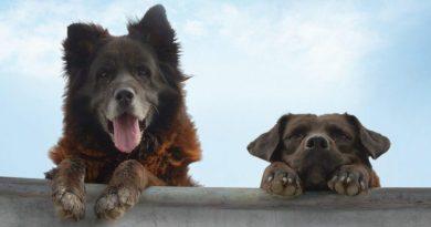 """Şili'den kalbinizi fethedecek bir köpek belgeseli: """"Los Reyes"""""""