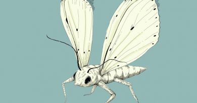 Evcilik Günleri: Merve Arslan'ın doğaya döndüğü çizimleri