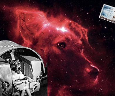 """""""Space Dogs"""" ya da bir """"anti-hayvan filmi"""" girişimi"""