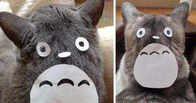 Kedinizi Totoro'ya çevirmek artık çok kolay!