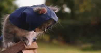 """Assasin's Creed"" karakterleri kedi olsaydı: ""Assasin's Kittens Unity"""