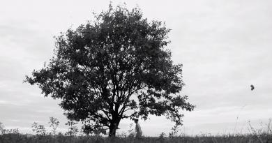 Günün şarkısı: ANADOL – Hatıralar